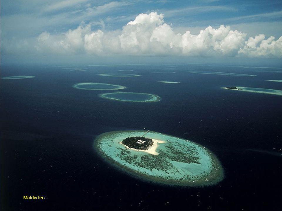 Maldiv ler