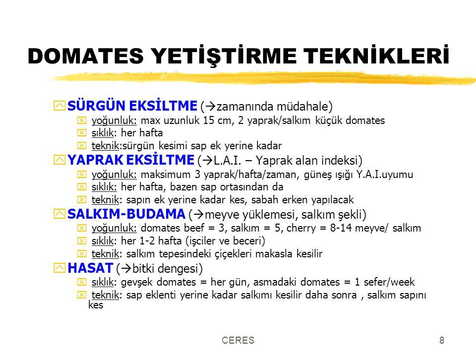 DOMATES YETİŞTİRME TEKNİKLERİ