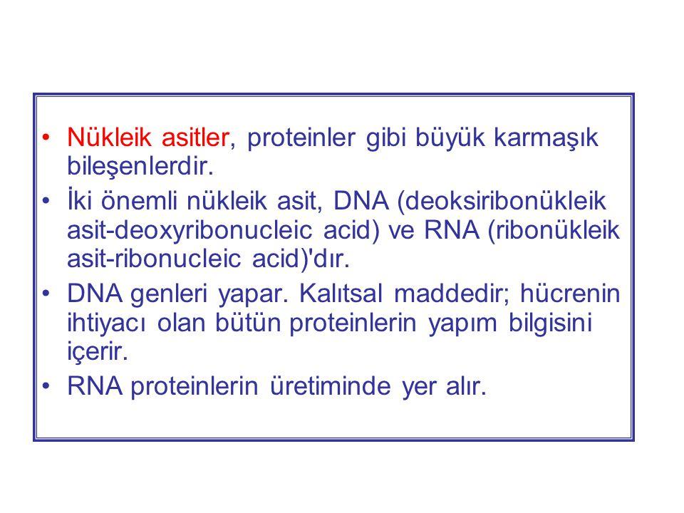 Nükleik asitler, proteinler gibi büyük karmaşık bileşenlerdir.
