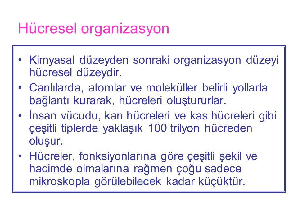 Hücresel organizasyon