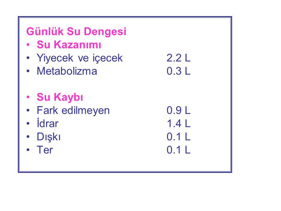 Günlük Su Dengesi Su Kazanımı. Yiyecek ve içecek 2.2 L. Metabolizma 0.3 L. Su Kaybı. Fark edilmeyen 0.9 L.