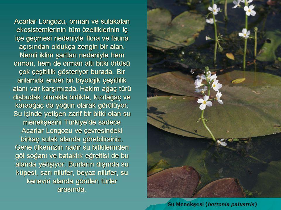 Acarlar Longozu, orman ve sulakalan ekosistemlerinin tüm özelliklerinin iç içe geçmesi nedeniyle flora ve fauna açısından oldukça zengin bir alan. Nemli iklim şartları nedeniyle hem orman, hem de orman altı bitki örtüsü çok çeşitlilik gösteriyor burada. Bir anlamda ender bir biyolojik çeşitlilik alanı var karşımızda. Hakim ağaç türü dişbudak olmakla birlikte, kızılağaç ve karaağaç da yoğun olarak görülüyor. Su içinde yetişen zarif bir bitki olan su menekşesini Türkiye'de sadece Acarlar Longozu ve çevresindeki birkaç sulak alanda görebilirsiniz. Gene ülkemizin nadir su bitkilerinden göl soğanı ve bataklık eğreltisi de bu alanda yetişiyor. Bunların dışında su küpesi, sarı nilüfer, beyaz nilüfer, su keneviri alanda görülen türler arasında.