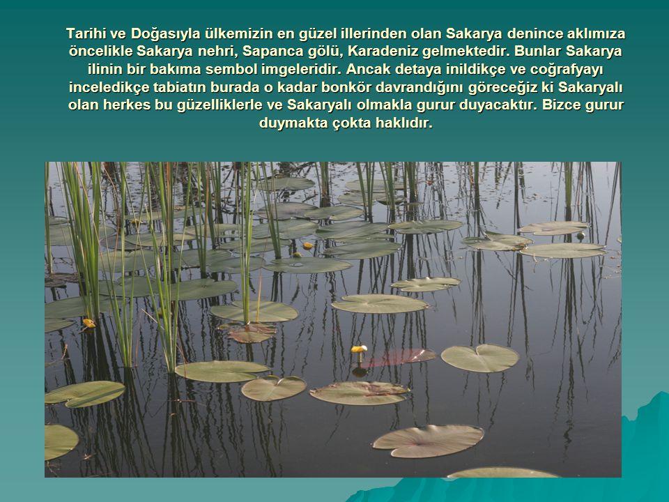 Tarihi ve Doğasıyla ülkemizin en güzel illerinden olan Sakarya denince aklımıza öncelikle Sakarya nehri, Sapanca gölü, Karadeniz gelmektedir.