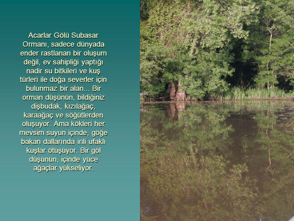 Acarlar Gölü Subasar Ormanı, sadece dünyada ender rastlanan bir oluşum değil, ev sahipliği yaptığı nadir su bitkileri ve kuş türleri ile doğa severler için bulunmaz bir alan...