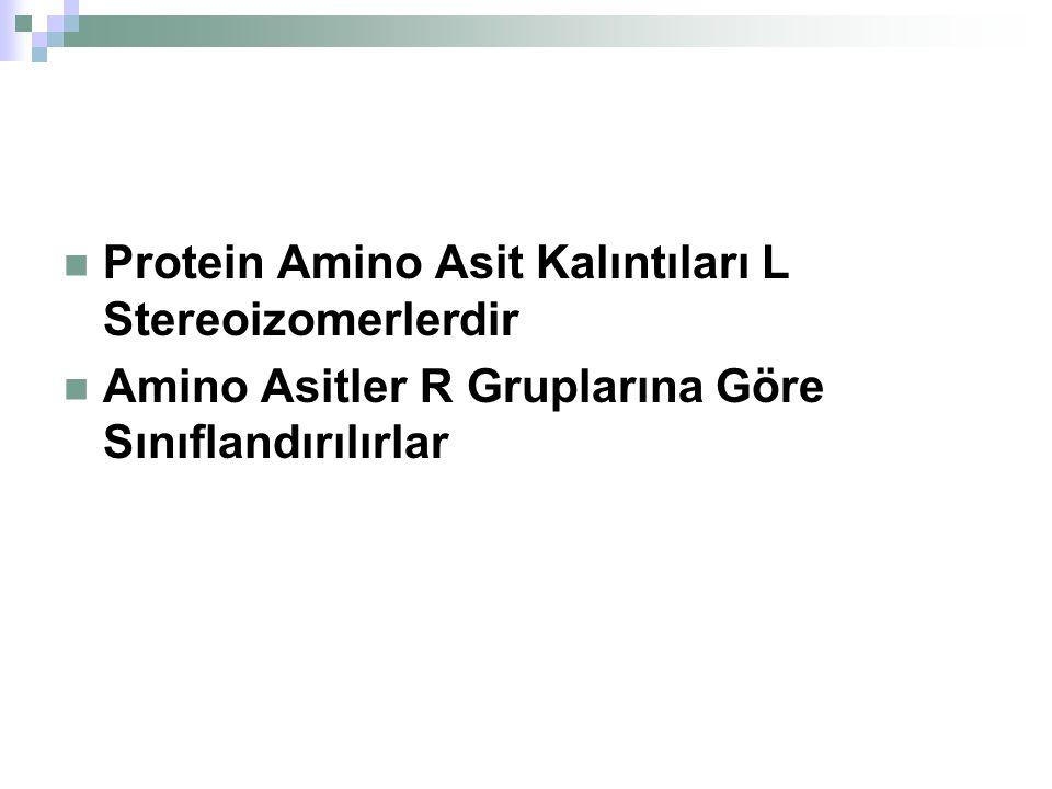 Protein Amino Asit Kalıntıları L Stereoizomerlerdir
