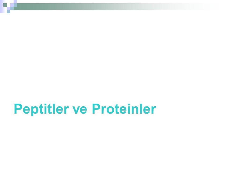 Peptitler ve Proteinler