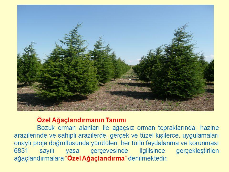 Özel Ağaçlandırmanın Tanımı