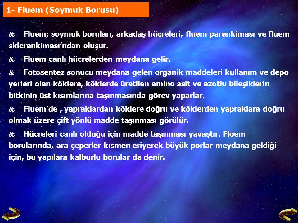 1- Fluem (Soymuk Borusu)