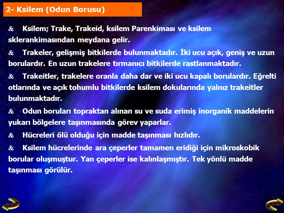 2- Ksilem (Odun Borusu)  Ksilem; Trake, Trakeid, ksilem Parenkiması ve ksilem sklerankimasından meydana gelir.