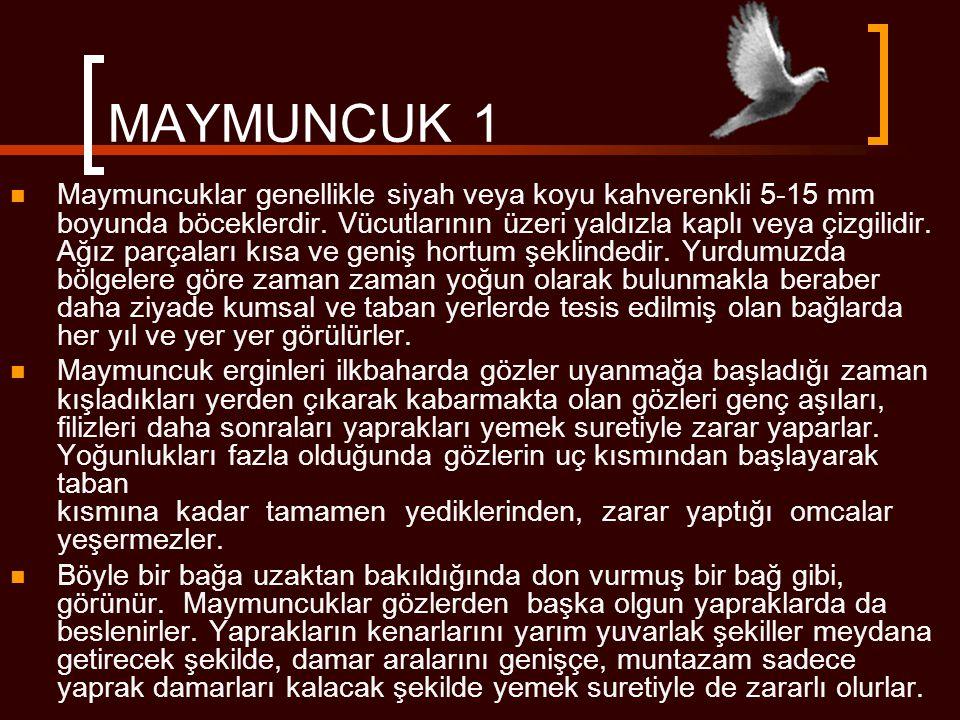 MAYMUNCUK 1