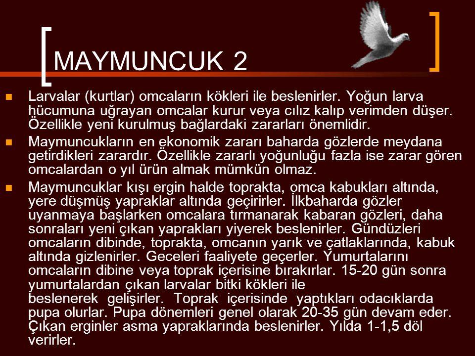 MAYMUNCUK 2