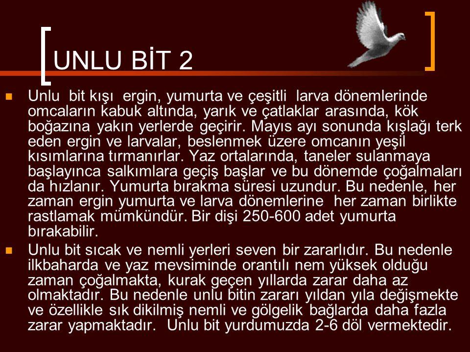UNLU BİT 2