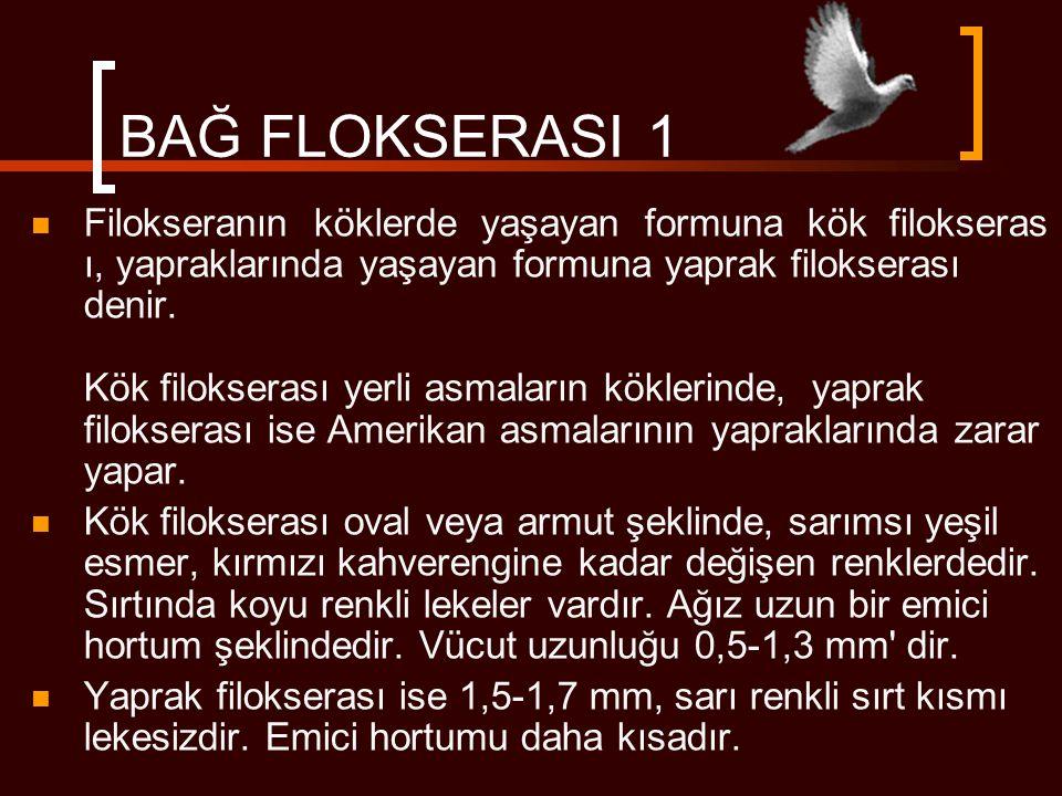 BAĞ FLOKSERASI 1