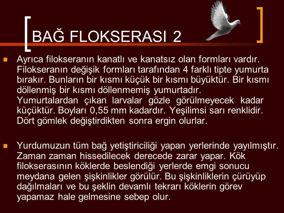 BAĞ FLOKSERASI 2