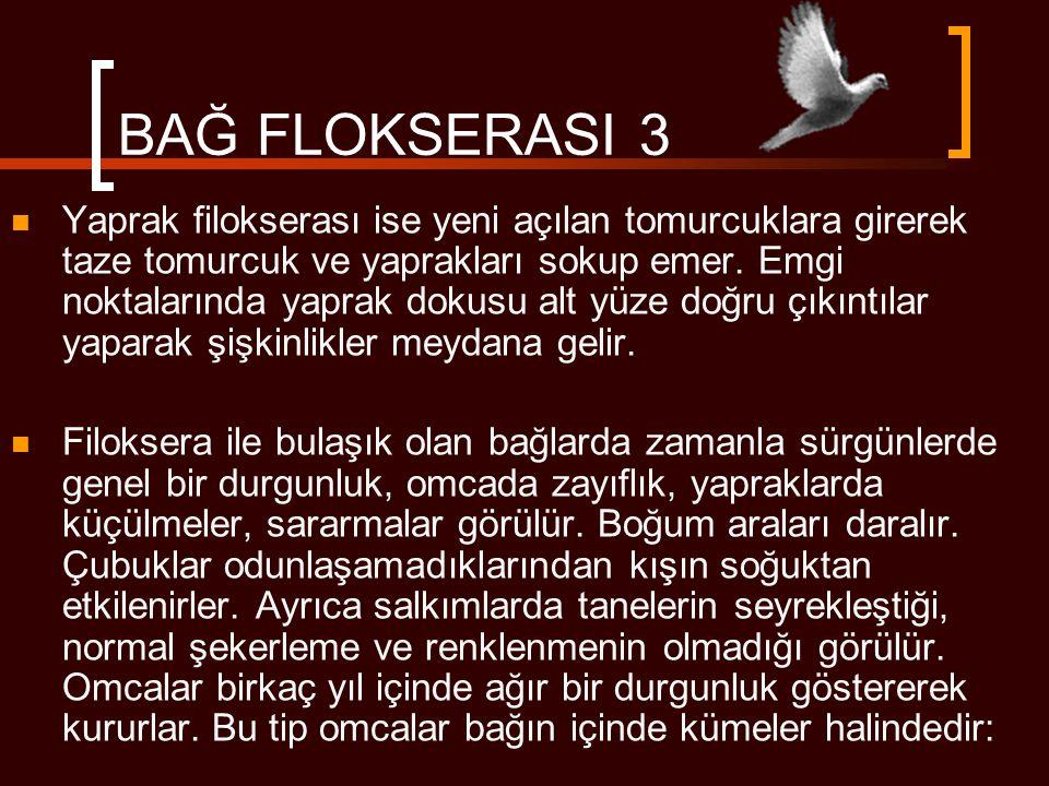 BAĞ FLOKSERASI 3