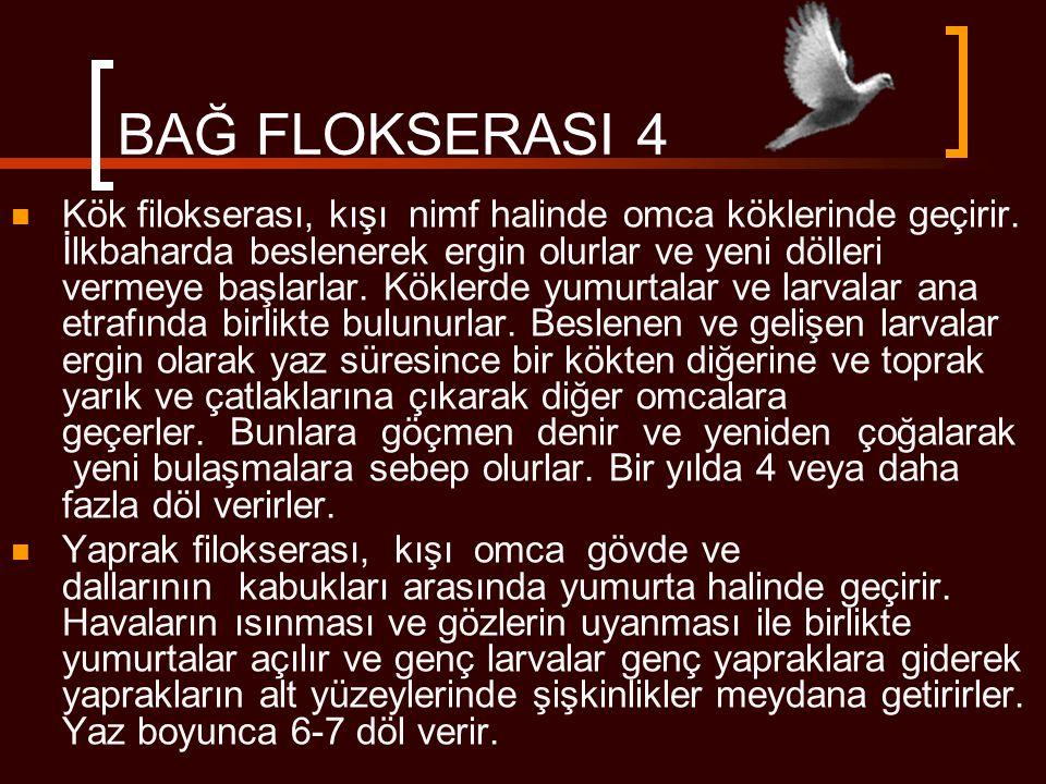 BAĞ FLOKSERASI 4