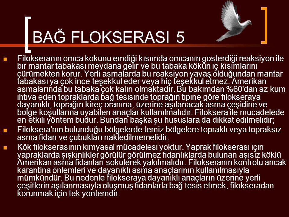 BAĞ FLOKSERASI 5