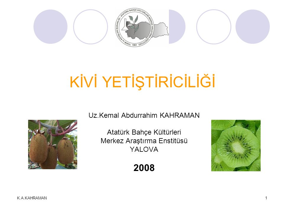 KİVİ YETİŞTİRİCİLİĞİ 2008 Uz.Kemal Abdurrahim KAHRAMAN