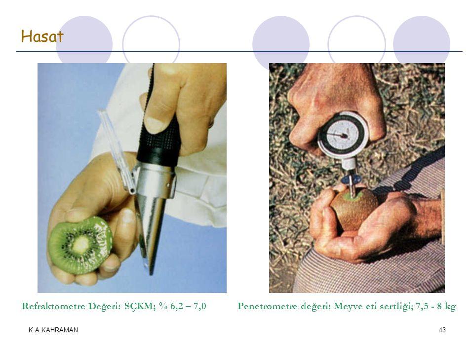 Hasat Refraktometre Değeri: SÇKM; % 6,2 – 7,0 Penetrometre değeri: Meyve eti sertliği; 7,5 - 8 kg.