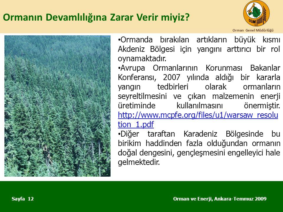 Ormanın Devamlılığına Zarar Verir miyiz