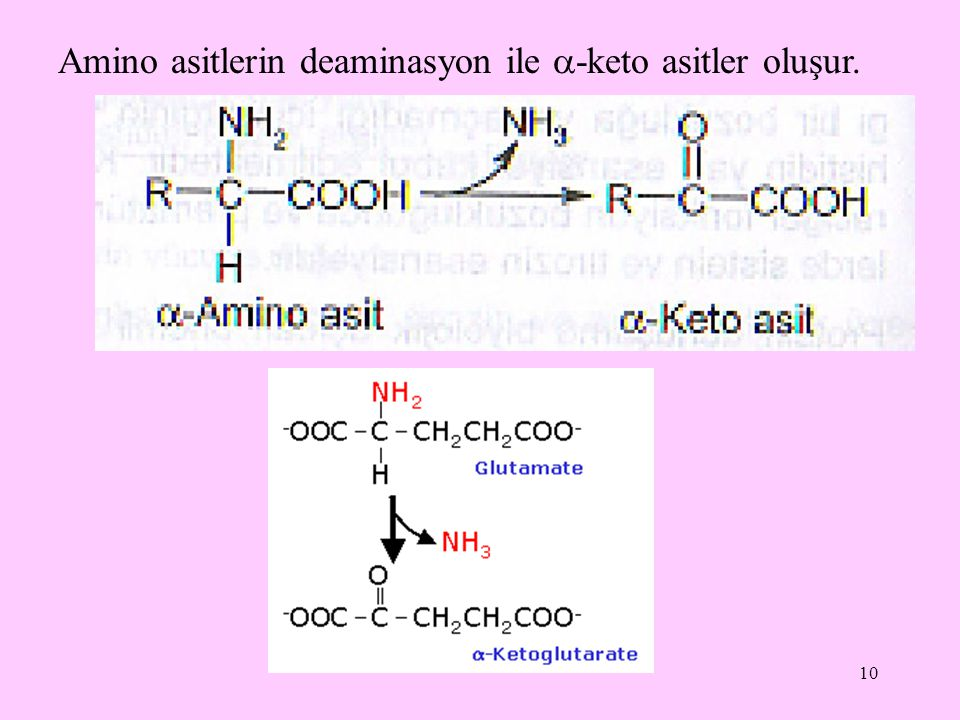 Amino asitlerin deaminasyon ile -keto asitler oluşur.