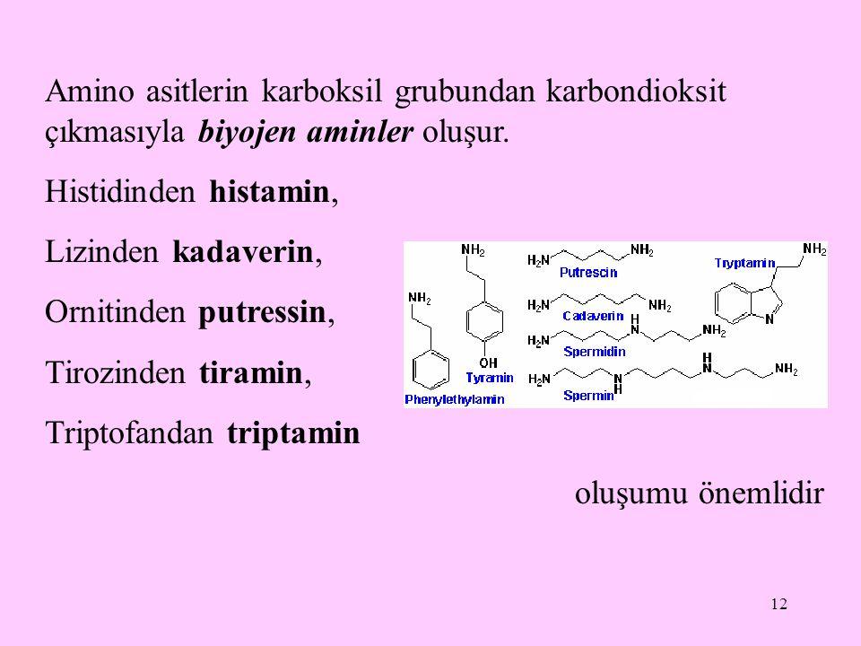 Amino asitlerin karboksil grubundan karbondioksit çıkmasıyla biyojen aminler oluşur.