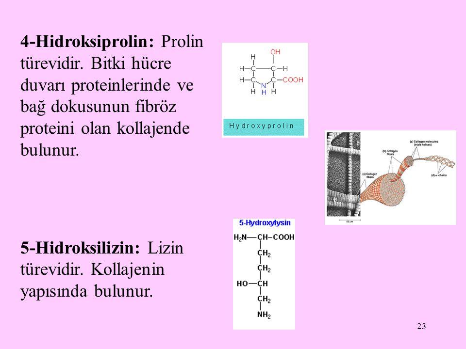 4-Hidroksiprolin: Prolin türevidir