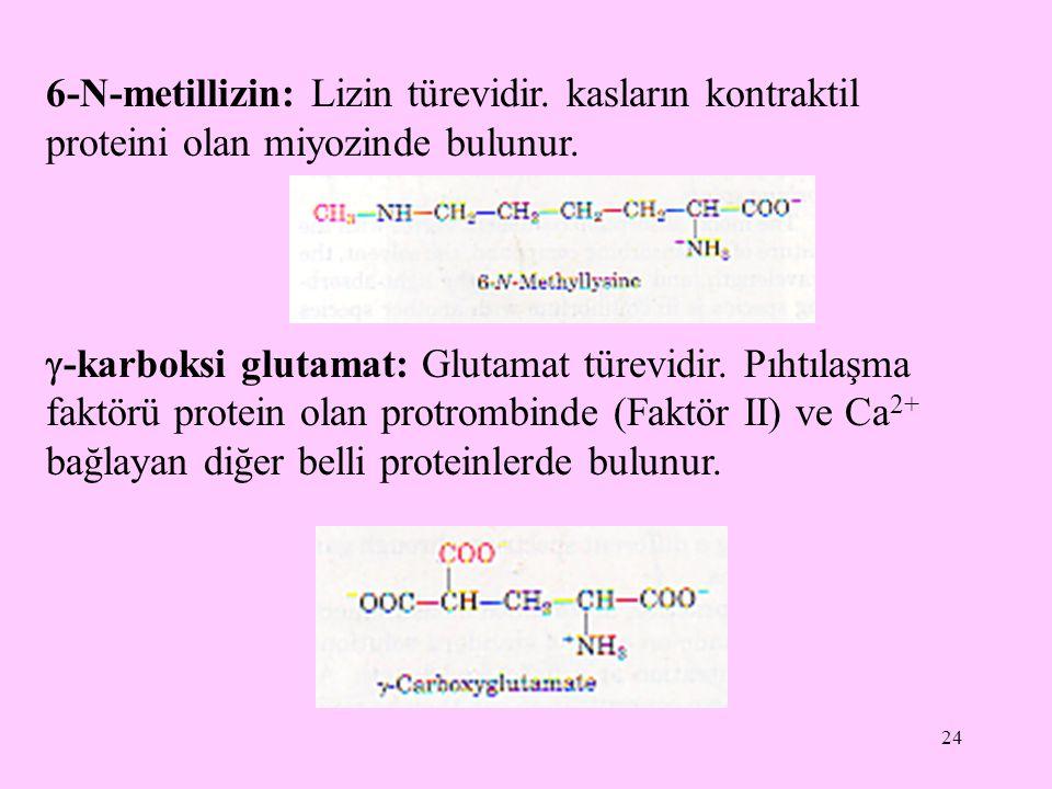 6-N-metillizin: Lizin türevidir
