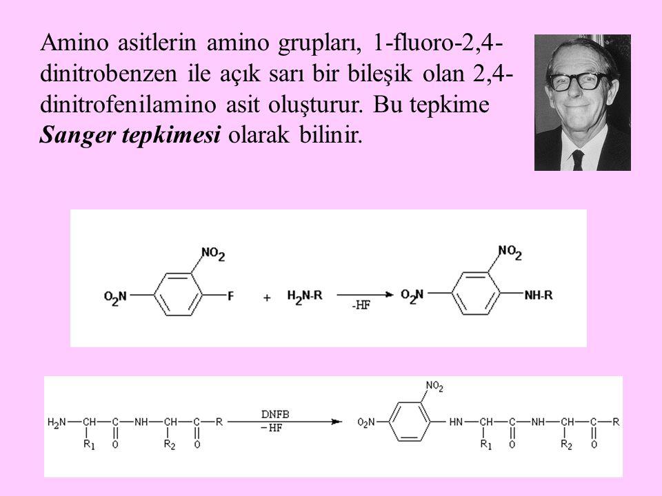 Amino asitlerin amino grupları, 1-fluoro-2,4-dinitrobenzen ile açık sarı bir bileşik olan 2,4-dinitrofenilamino asit oluşturur.