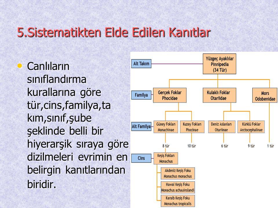 5.Sistematikten Elde Edilen Kanıtlar
