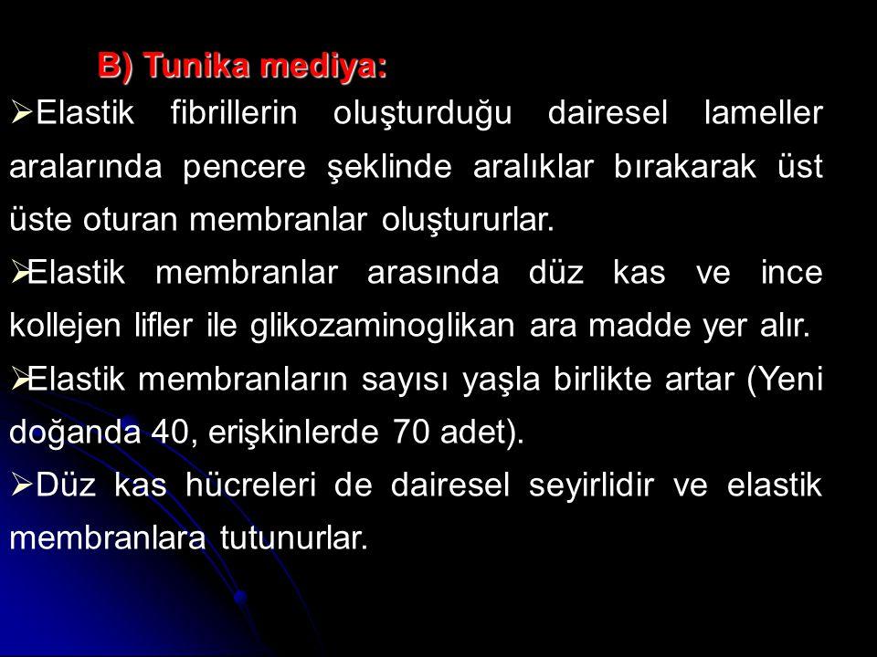 B) Tunika mediya: