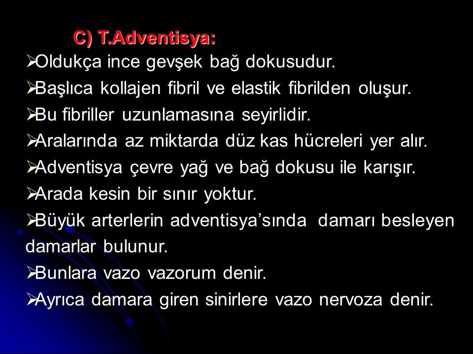 C) T.Adventisya: Oldukça ince gevşek bağ dokusudur. Başlıca kollajen fibril ve elastik fibrilden oluşur.