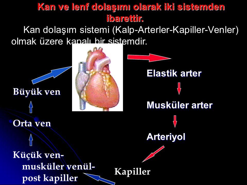 Kan ve lenf dolaşımı olarak iki sistemden ibarettir.