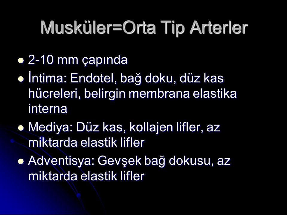 Musküler=Orta Tip Arterler