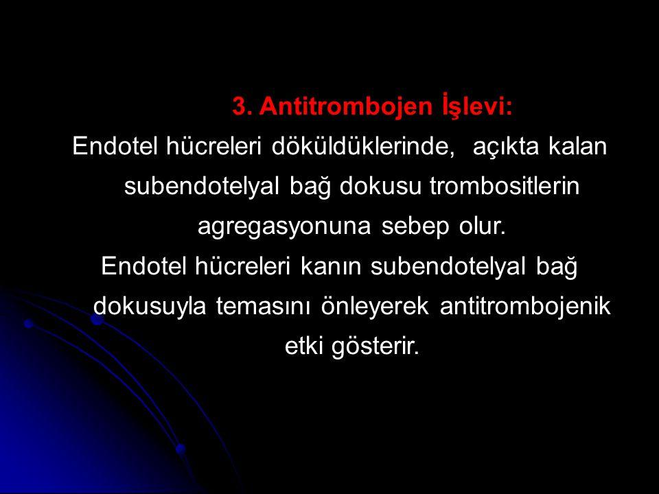 3. Antitrombojen İşlevi: