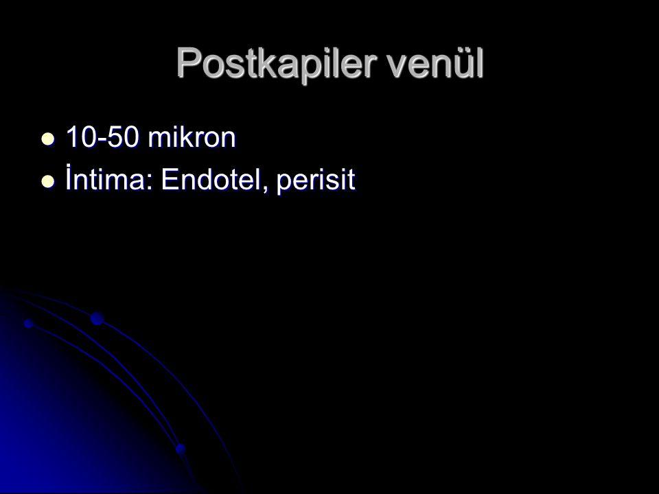 Postkapiler venül 10-50 mikron İntima: Endotel, perisit