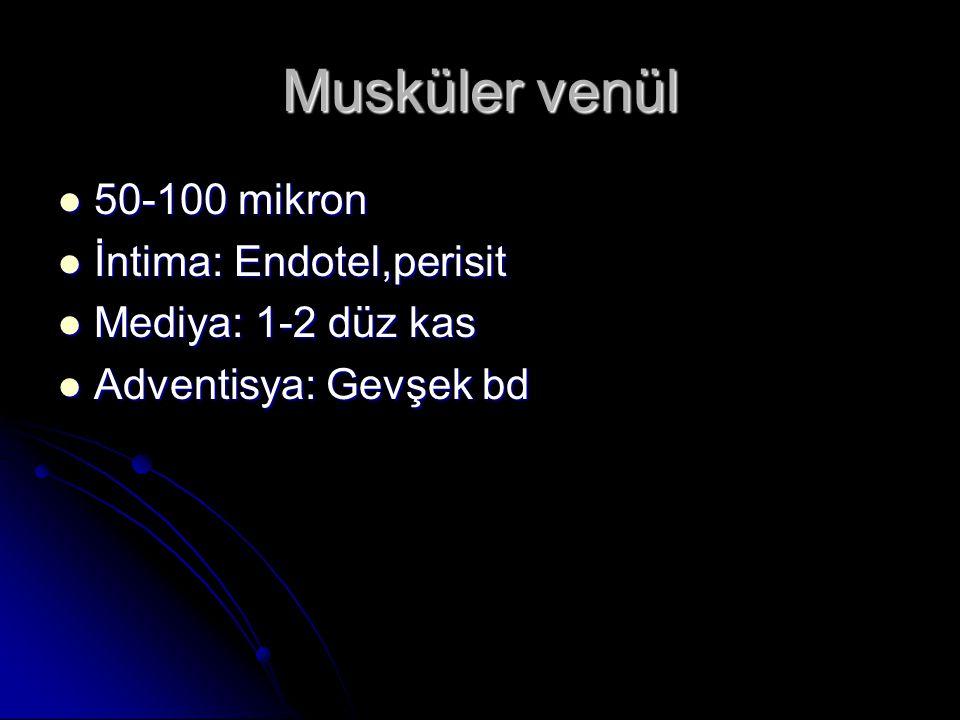 Musküler venül 50-100 mikron İntima: Endotel,perisit
