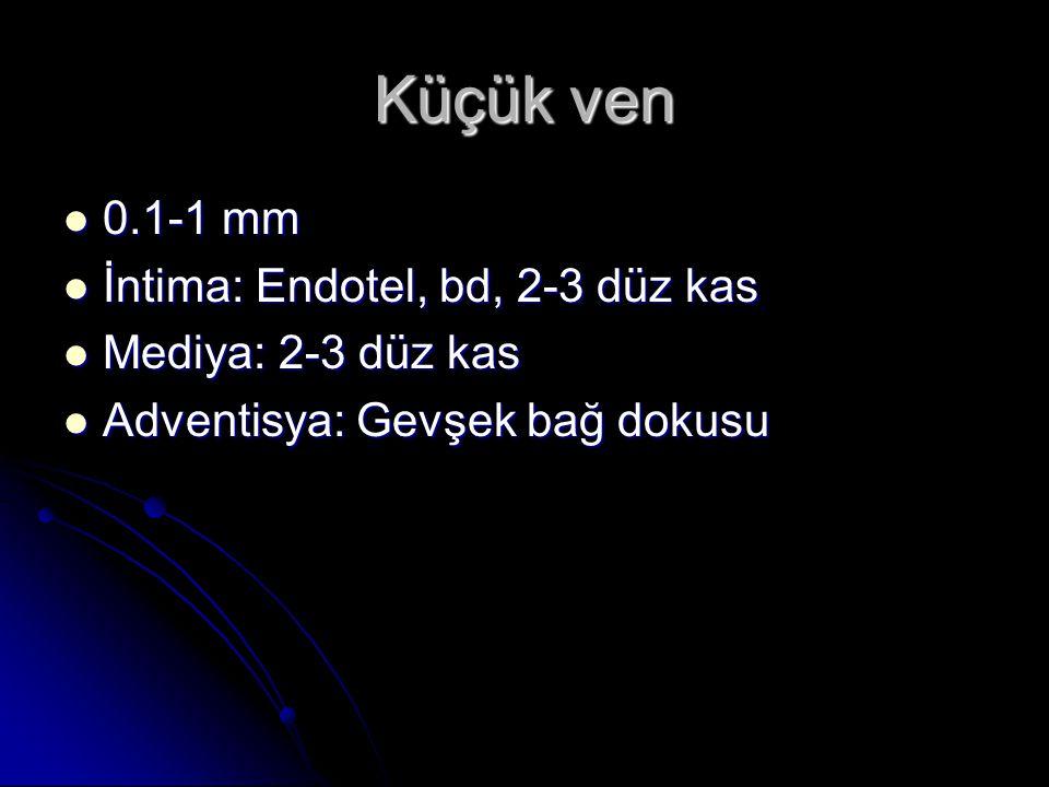 Küçük ven 0.1-1 mm İntima: Endotel, bd, 2-3 düz kas