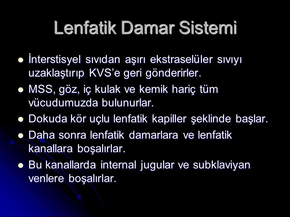 Lenfatik Damar Sistemi