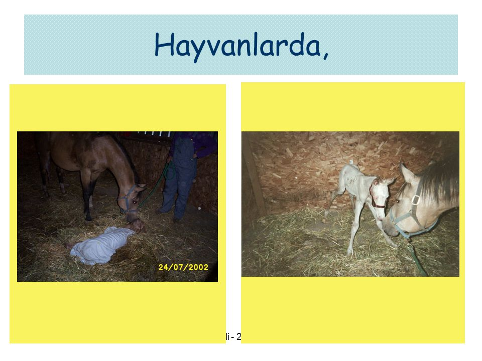 Hayvanlarda, Kocaeli - 24.09.2007