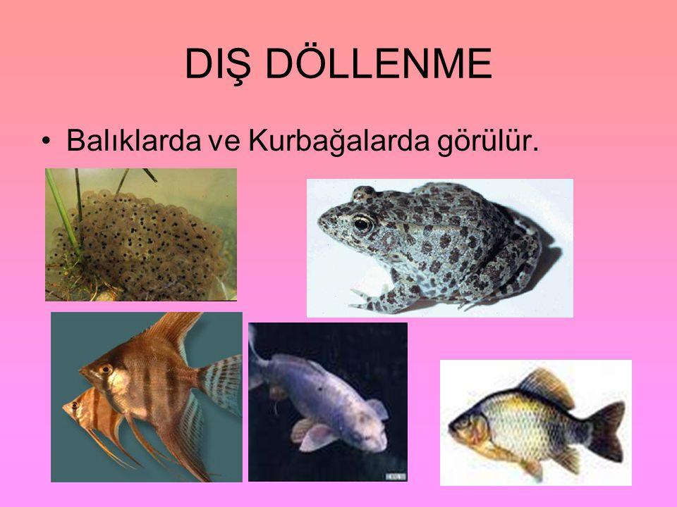 DIŞ DÖLLENME Balıklarda ve Kurbağalarda görülür.