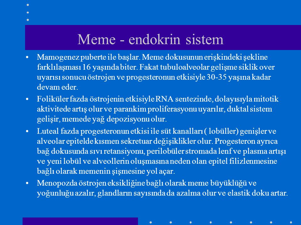 Meme - endokrin sistem