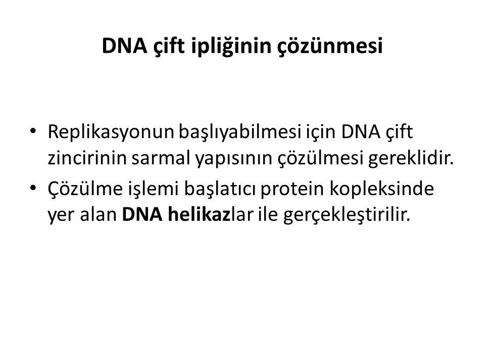 DNA çift ipliğinin çözünmesi
