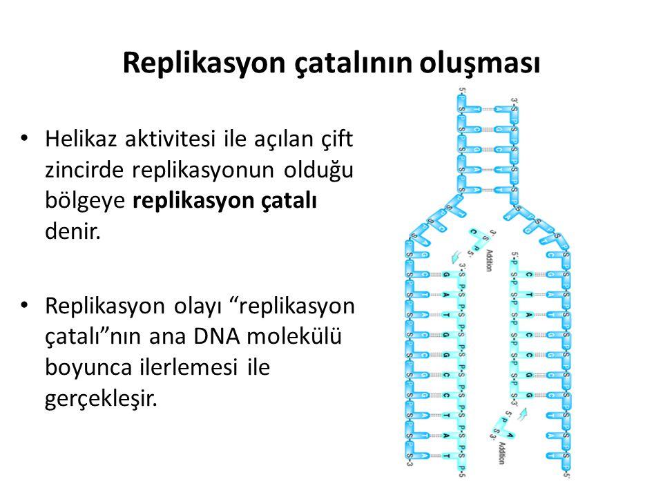 Replikasyon çatalının oluşması