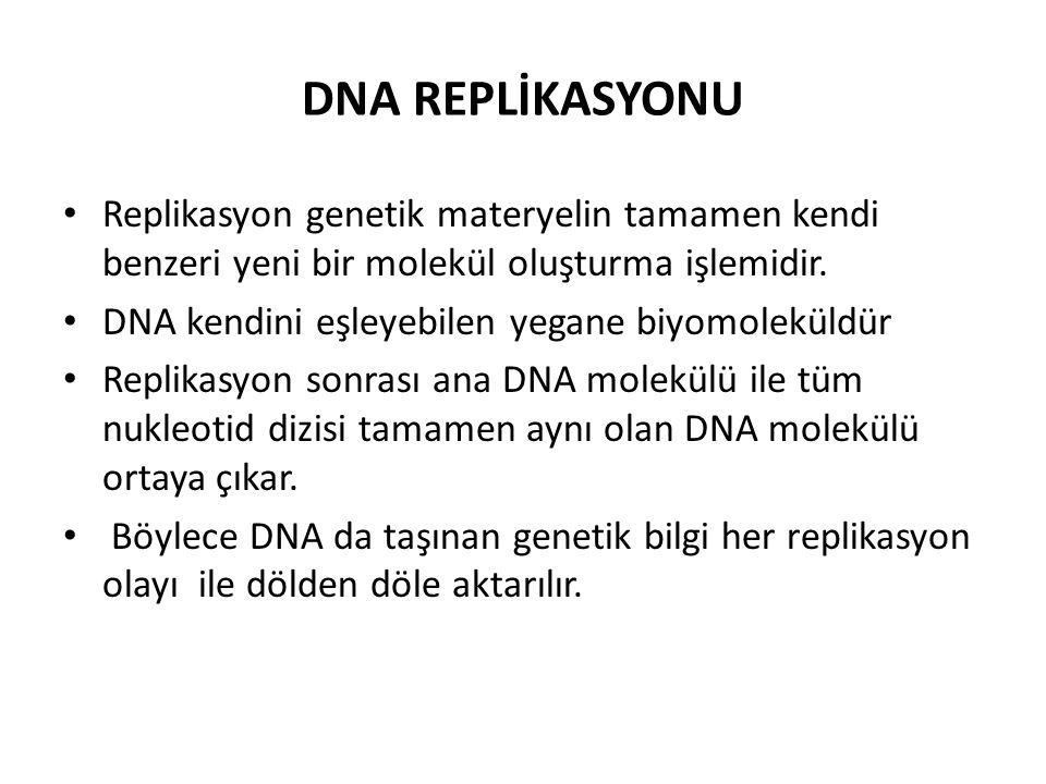 DNA REPLİKASYONU Replikasyon genetik materyelin tamamen kendi benzeri yeni bir molekül oluşturma işlemidir.