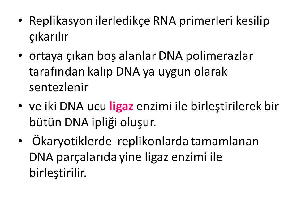 Replikasyon ilerledikçe RNA primerleri kesilip çıkarılır