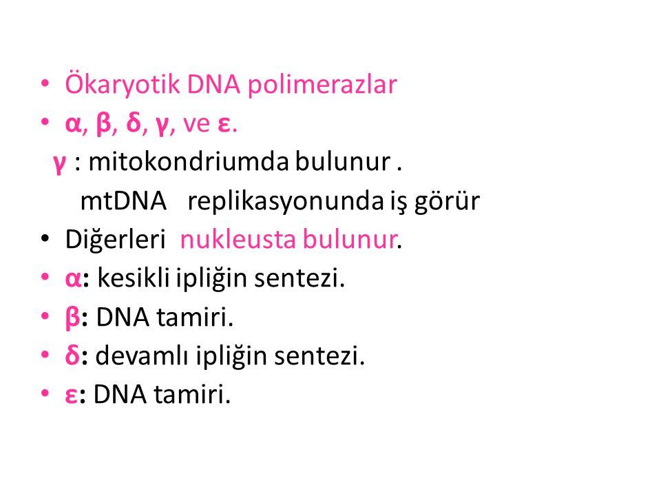 Ökaryotik DNA polimerazlar