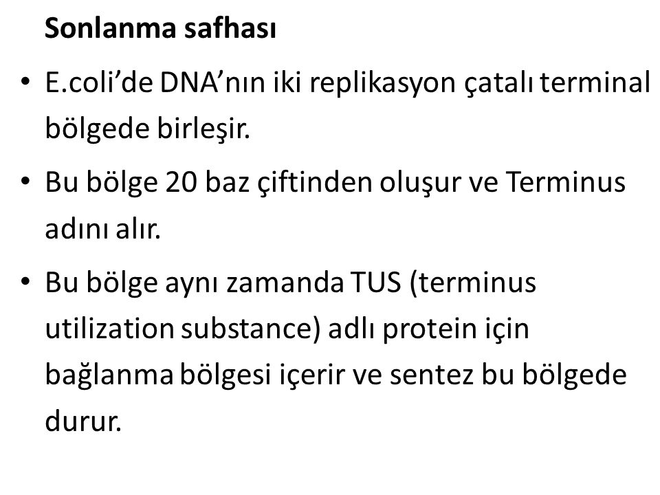 Sonlanma safhası E.coli'de DNA'nın iki replikasyon çatalı terminal bölgede birleşir. Bu bölge 20 baz çiftinden oluşur ve Terminus adını alır.
