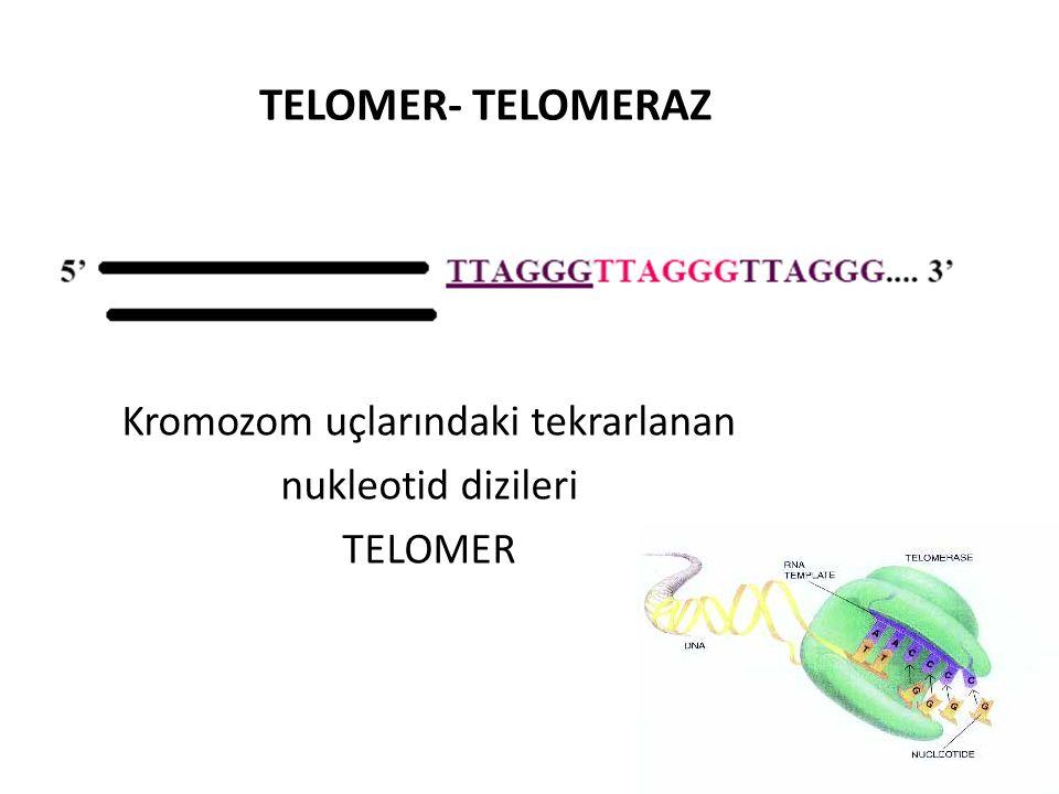 Kromozom uçlarındaki tekrarlanan