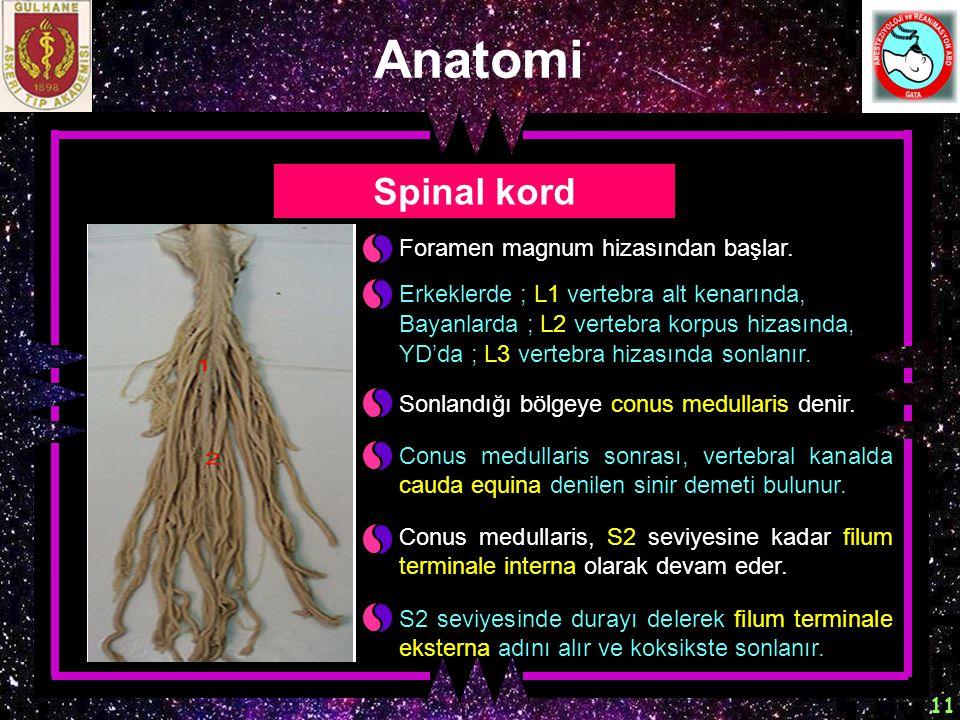 Anatomi Spinal kord Foramen magnum hizasından başlar.
